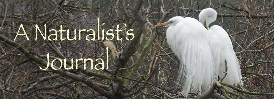 A Naturalist's Journal