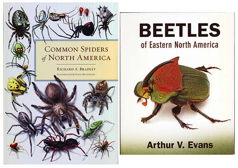 Spider-and-beetle-books
