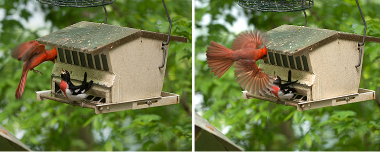 Aerial attack by the Cardinal