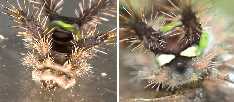 Views of the front and back ends of the caterpillar